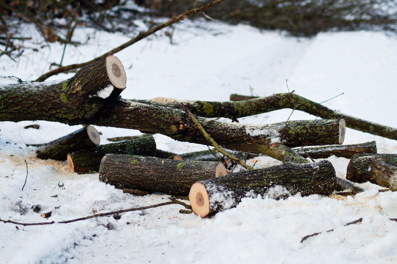 Burning Wood Close-up Cold Temperature Day Deforestation Lieblingsteil Log Nature No People Outdoors Snow The City Light Tree Winter Wood