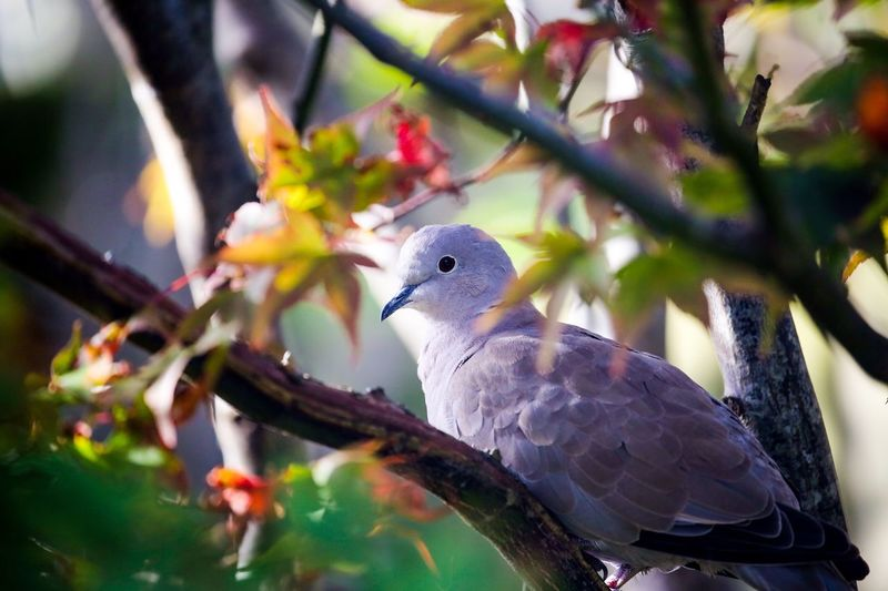 A pair of doves have moved into the tree in the garden... I keep a bird feeder in it and now they will even stay in the next branch all cuddled together as i fill it. That's as tame as I would like them. We have a good chat every day and even when I go out they wait sometimes on the roof of the house. So cute. Vertebrate Animal Themes Animal Bird Animal Wildlife Perching Animals In The Wild Tree One Animal Focus On Foreground No People Branch Plant Nature Day Close-up Dove - Bird Outdoors
