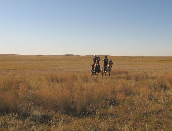 Friends Riding Horses On Grassy Field