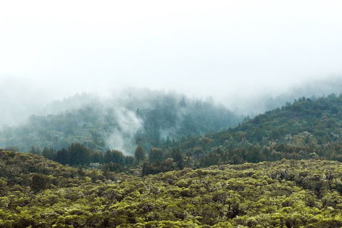 Nature Fog Tree Landscape Scenics Tranquility Beauty In Nature Tranquil Scene Weather Non-urban Scene Mountain Remote No People Mist Idyllic Outdoors Day Forest Growth Hazy