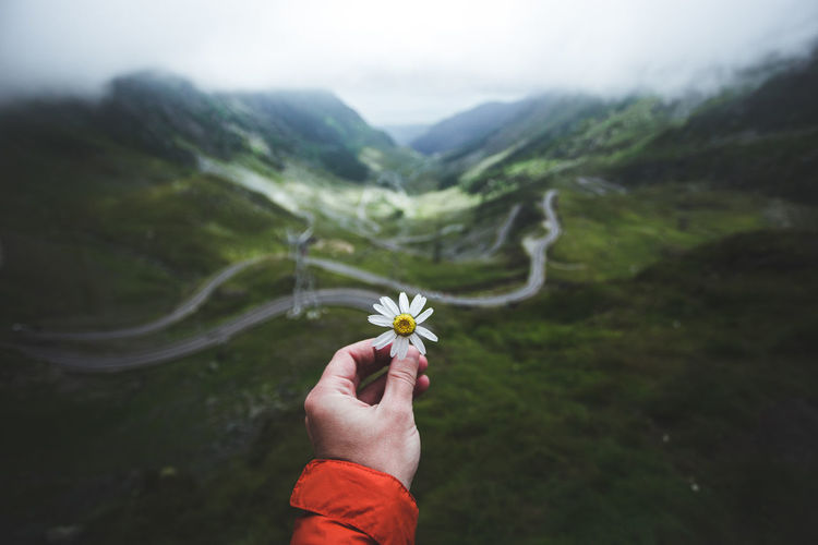 Cropped image of hand holding flower against mountains