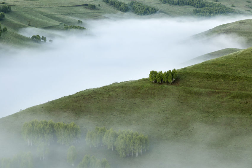 foggy morning in Apuseni Mountains Travel Beauty In Nature Day Fog Grass Green Color Growth Landscape Mist Mountains Nature No People Outdoors Scenics Tranquil Scene Tranquility Tree