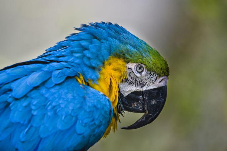 Vogelpark Heiligenkirchen Detmold Tiere Animals Tageslicht Papagei Papagei Ara