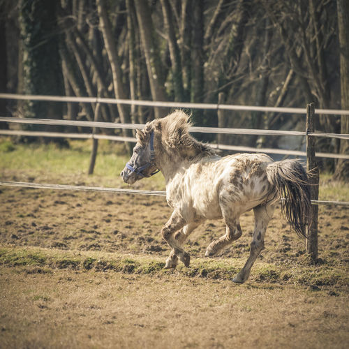 Horse galloping in the sun Animal Themes Day Domestic Animals Horse Livestock Mammal Nature No People One Animal Outdoors Pony Portrait