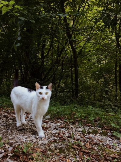 Portrait of cat standing in forest