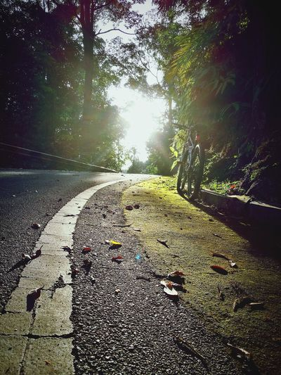 Nature Day No People Sunlight Outdoors Water Tranquility Shadow Tree Beauty In Nature Sky Sun Shine State 🌞 Good Morning Sunshine CyclingUnites Cycling Sunny Day❤