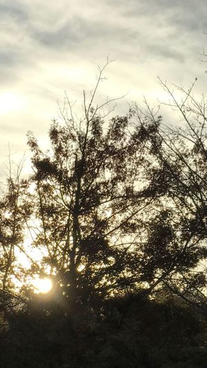 Tree Nature Sky No People Beauty In Nature Growth Outdoors Tranquility Low Angle View Silhouette Day Scenics Branch