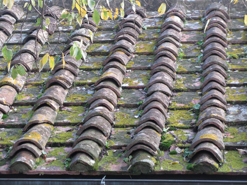 Old roof tiles on the roof of an old house Architecture Residential  Roof Rooftop Textured  Built Ceramic Clay Cover Detail Grunge House Old Outdoors Overlap Protection Repeat Row Shelter Striped Terracotta Tile Traditional Waterproof Weatherproof