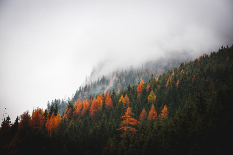 autumn 001. Tree Plant Forest Scenics - Nature Beauty In Nature Land Autumn Sky Nature No People Growth WoodLand Tranquil Scene Non-urban Scene Tranquility Environment Landscape Wilderness Day Change Outdoors Pine Tree Pine Woodland Evergreen Tree Coniferous Tree Autumn Autumn colors autumn mood Foggy Foggy Day Foggy Weather Foggy Landscape Nature Nature Photography Nature_collection EyeEm Best Shots EyeEm Nature Lover EyeEm Selects EyeEm Gallery Austria Österreich Moody My Best Photo