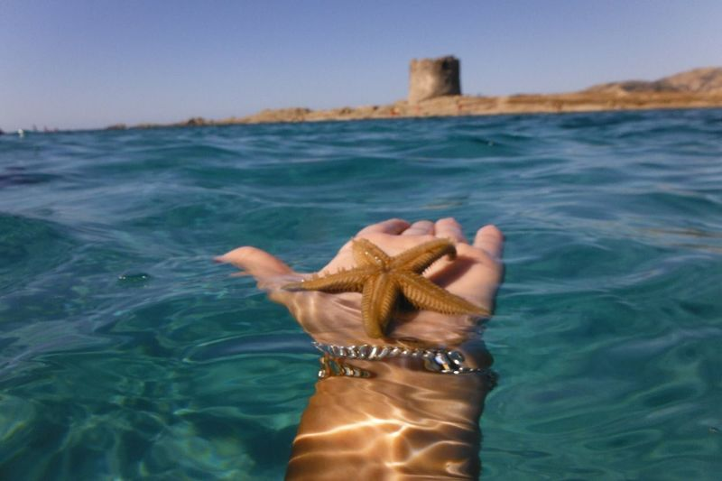 Cropped hand holding starfish in sea