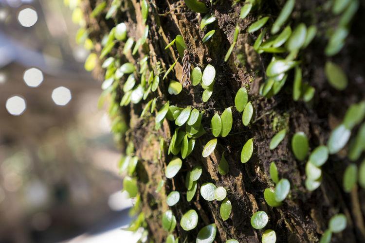 上色見熊野座神社 Tree Defocused Tree Trunk Christmas Decoration Pinaceae Moss Lichen Closing christmas tree Close-up