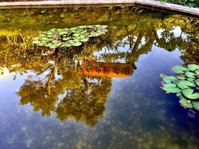 Inverted Images Aquatic