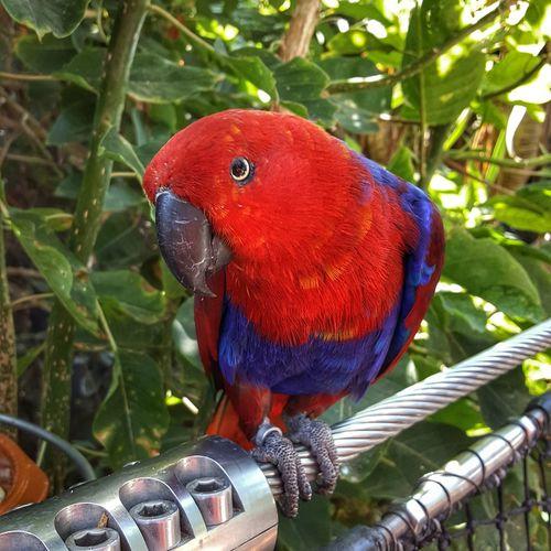 Papagei auf Teneriffa Fototour Photography Photooftheday Photographer Teneriffa Kanarische Inseln Loro Parque Puerto De La Cruz Canary Islands Bird Birds Bird Photography
