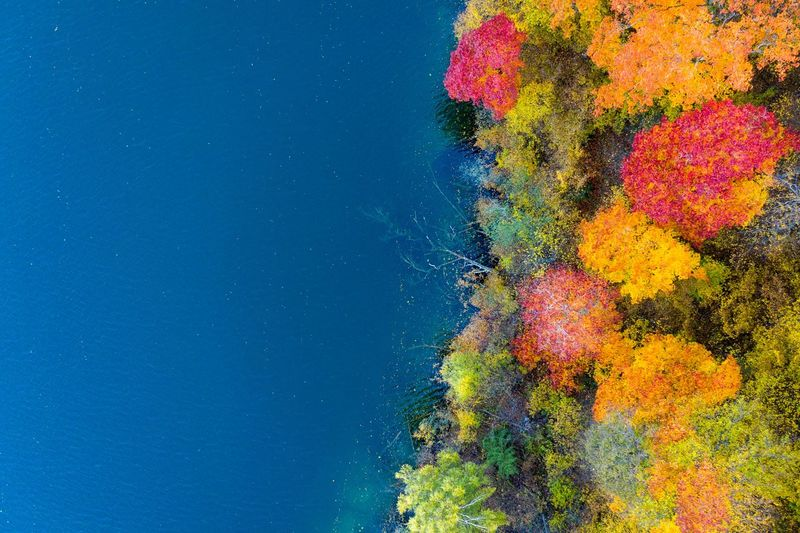 Autumn flowers Autumn colors Forest Lake Aerial