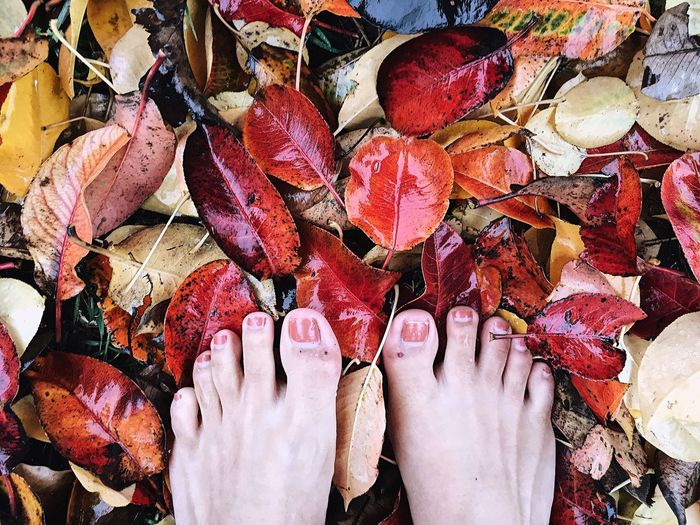 Leaf Change Autumn High Angle View Directly Above Low Section Multi Colored Human Body Part Real People One Person Outdoors Close-up Human Leg Day People Adult Human Hand