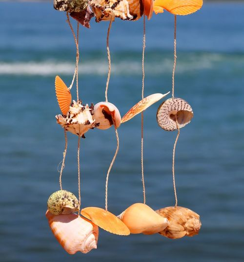craft object with rare shells hanging from a wire to decorate the House Mediterranean  San Vito Lo Capo Sicily Travel Background Backgrounds Climate Focus On Foreground Hang Hanging Italian Italy Ocean Outdoors Sea Shell Shells Souvenir Tropical