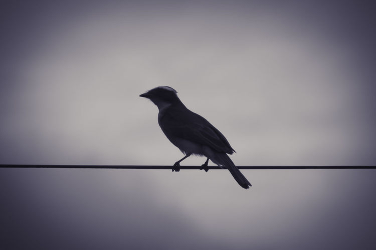 Full Length Of Bird Perching On Cable Against Sky