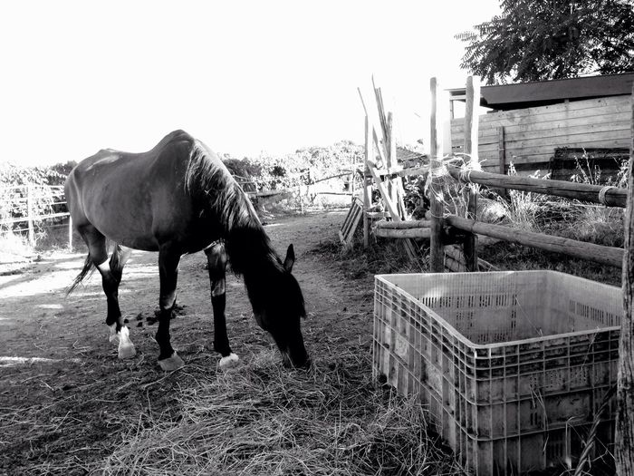 Pit stop in the Countryside 🐎 Sofiavicchi Sofiavicchiconceptdesign Horse Horses Animals Country Life Cavalli Bnw Bnwphotography