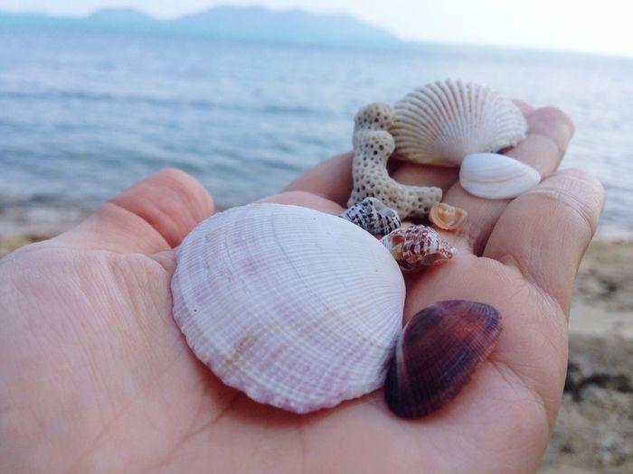 Seashells Kohtao Thailand Sea Island Sand Sun