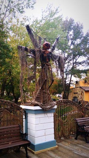 Creeper. Pumpkin Head Pumpkin Headless Tree Outdoors Day Standing Statue Adult