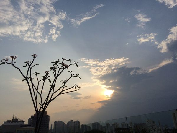 Building Exterior Sky Architecture No People City Built Structure Outdoors Cloud - Sky Tree Nature Sunset Beauty In Nature
