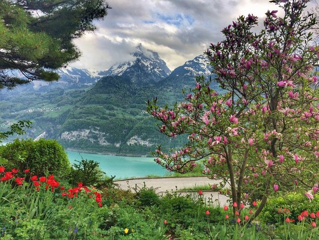 View EyeEm Nature Lover Blue Lake Mountains Plant Beauty In Nature Growth Cloud - Sky Sky Nature Flower Tree Flowering Plant Outdoors