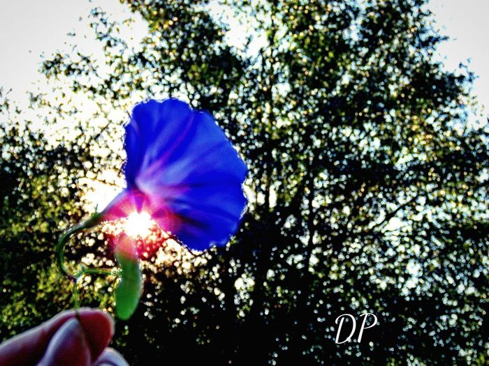 You can always catch a beautiful sunset. Human Hand Real People Human Body Part One Person Holding Close-up Flower Outdoors Day Tree Nature Fragility Beauty In Nature Freshness Flower Head People