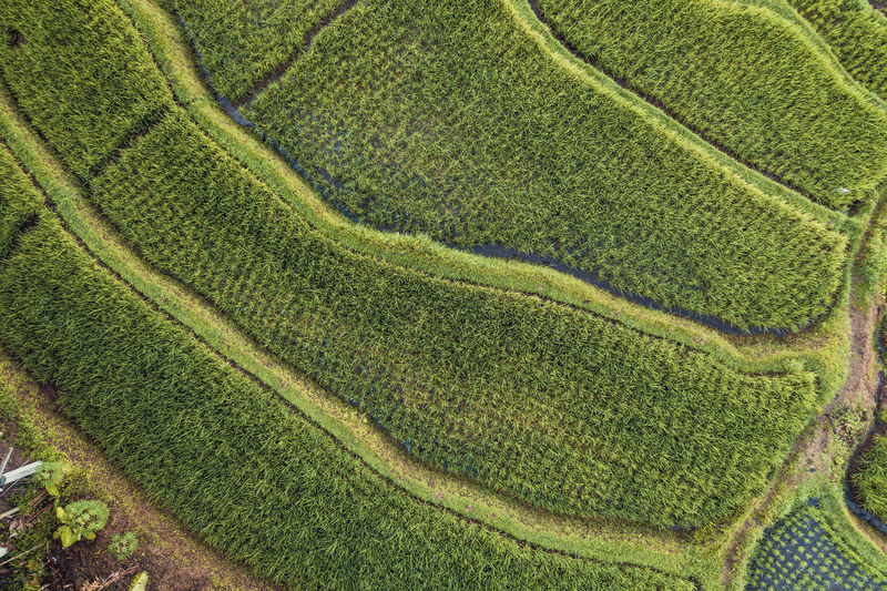 Green Color Growth Plant Aerial View Land No People Full Frame Landscape Rural Scene Pattern Agriculture Scenics - Nature Nature Field Beauty In Nature Backgrounds Outdoors Environment Farm Day Crop  Above