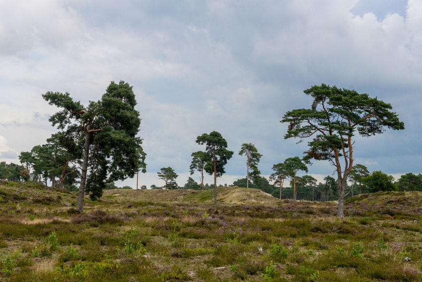 Tafelberg hiking route in Hulshorst the Netherlands Hulshorst Netherlands The Netherlands Beauty In Nature Cloud - Sky Day Field Grass Growth Hiking Trail Holland Landscape Nature No People Outdoors Scenics Sky Tafelberg Tranquil Scene Tranquility Tree