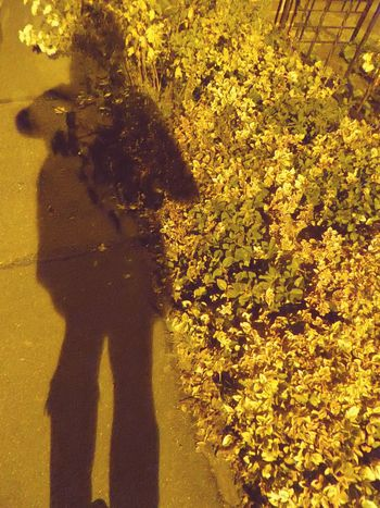 Shadows & Lights Shadow Play Shadowselfies In The Light Of A LanternTranquil Scene Good Night ♡♡ Beauty In November Cold Temperature Tranquility Celebrate The Little Things For My Friends 😍😘🎁 Love Silhouettes On My Way Home By Bike Nightshot-collection Nightview Beauty In My Every Day Life Nightphotography In The Shine Of A Lantern