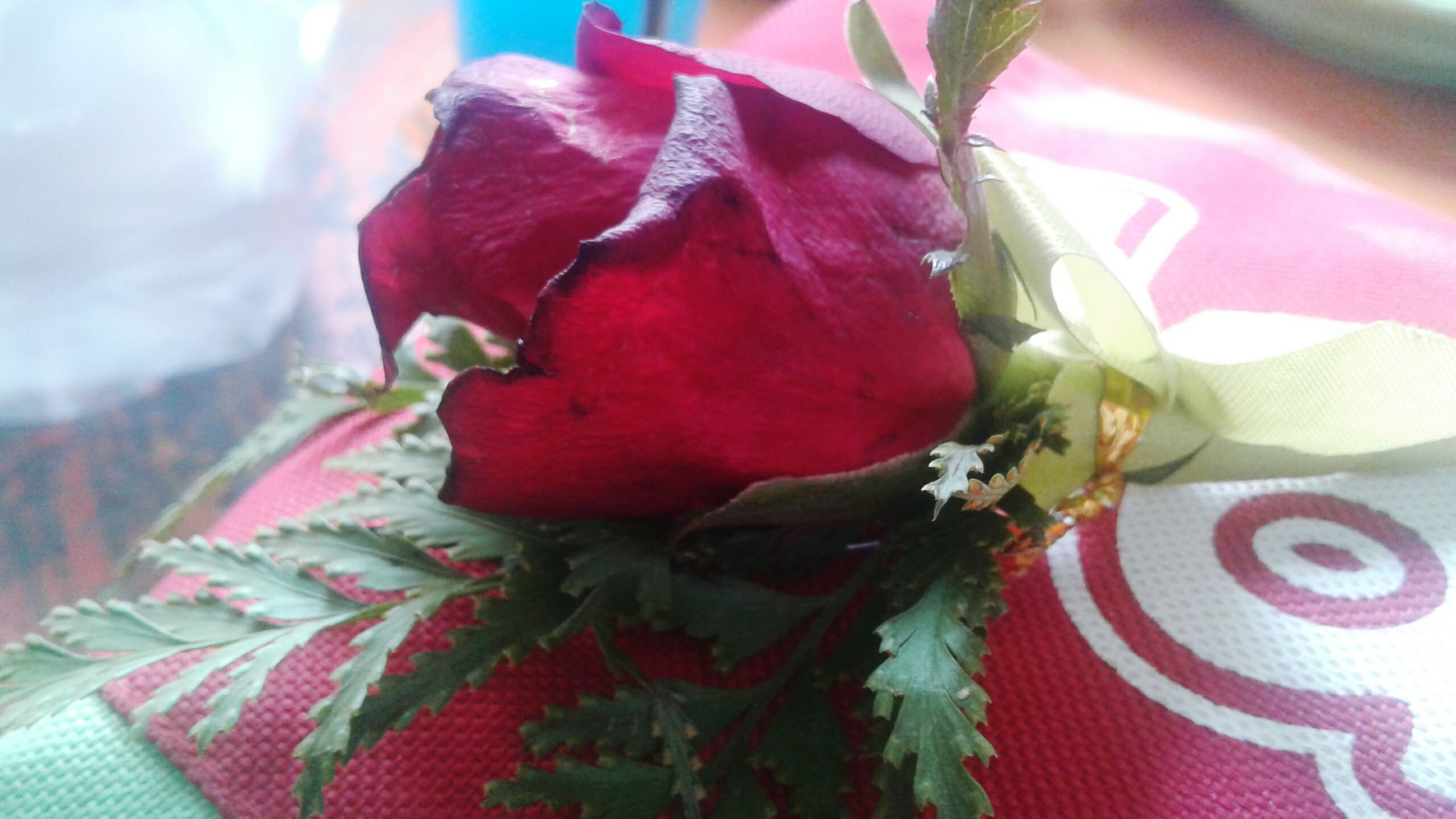 flower, nature, petal, red, growth, freshness, fragility, plant, close-up, beauty in nature, flower head, no people, day, outdoors, maroon