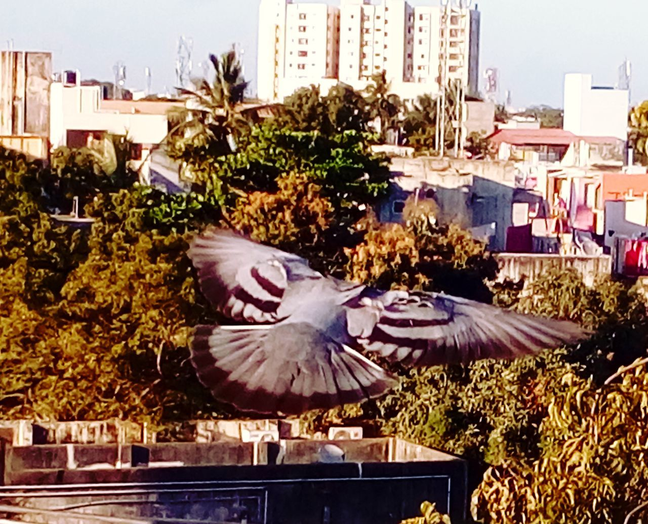 architecture, building exterior, built structure, bird, city, spread wings, animal themes, city life, outdoors, animals in the wild, no people, nature, one animal, flying, day, skyscraper, flower, tree, cityscape, beauty in nature