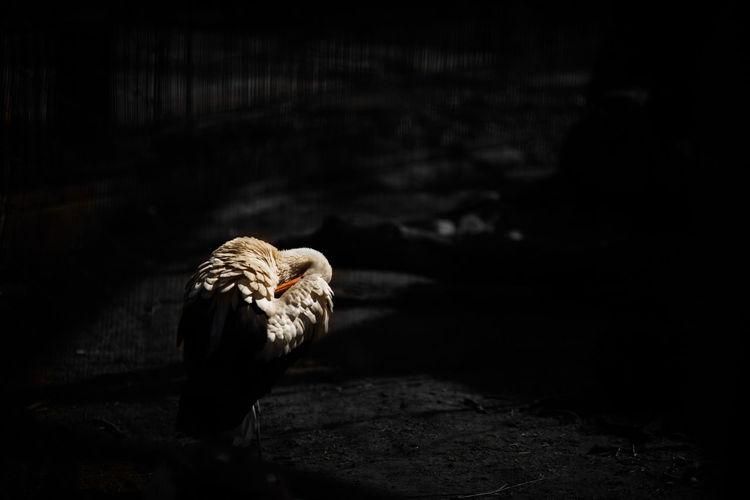 Stork at zoo