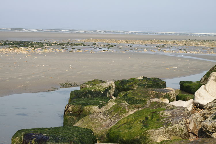 Côte D'Opale France Pas De Calais Rock Seaweed Beach Beauty In Nature Day Land Nature No People Non-urban Scene Outdoors Rock Rock - Object Sand Scenics - Nature Sea Solid Tranquility Water