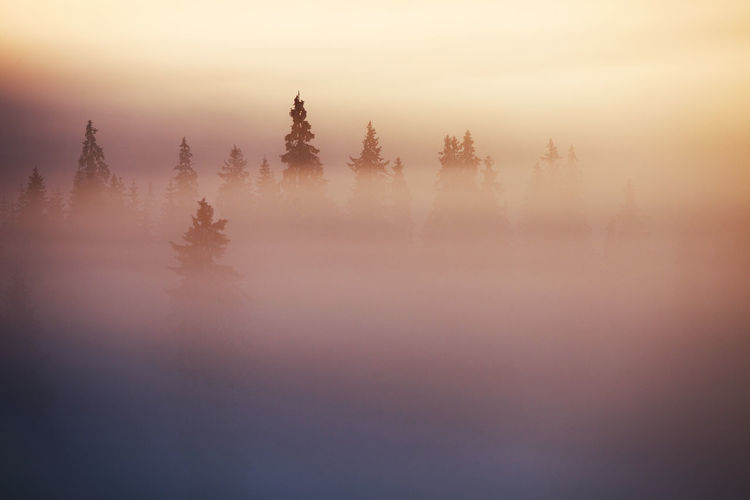 Winter landscapes with Rodnei Mountains, Romania. Alpine Ice Light Morning Nature Silhouette Trees Weather Winter Beauty Cold Fog Foggy Forest Hazy  Landscape Mist Mountain Pine Tree Season  Snow Sunrise Tranquility White Perspectives On Nature