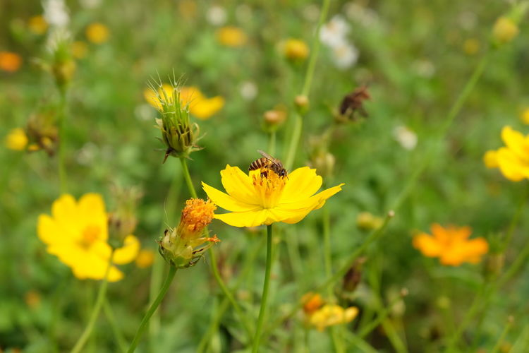 yellow flower Flower Flowering Plant Plant Fragility Freshness Vulnerability  Growth Yellow Beauty In Nature Flower Head Petal Inflorescence Close-up Nature Invertebrate Insect Land No People Day Field Pollen Outdoors Pollination