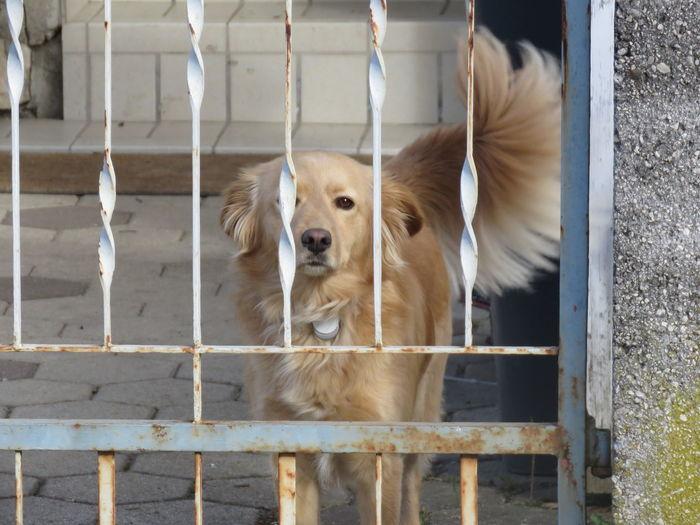 Waiting dog, watchdog Waiting Watchdog Watch Dog Dog Pets Dog Happiness Close-up #urbanana: The Urban Playground