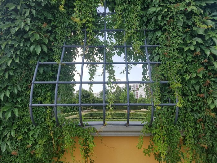 Trees growing in greenhouse