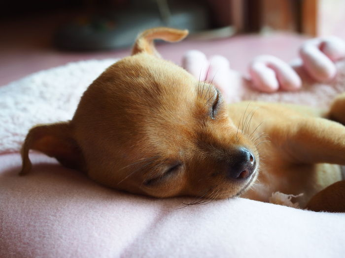Close-up of a dog sleeping on bed