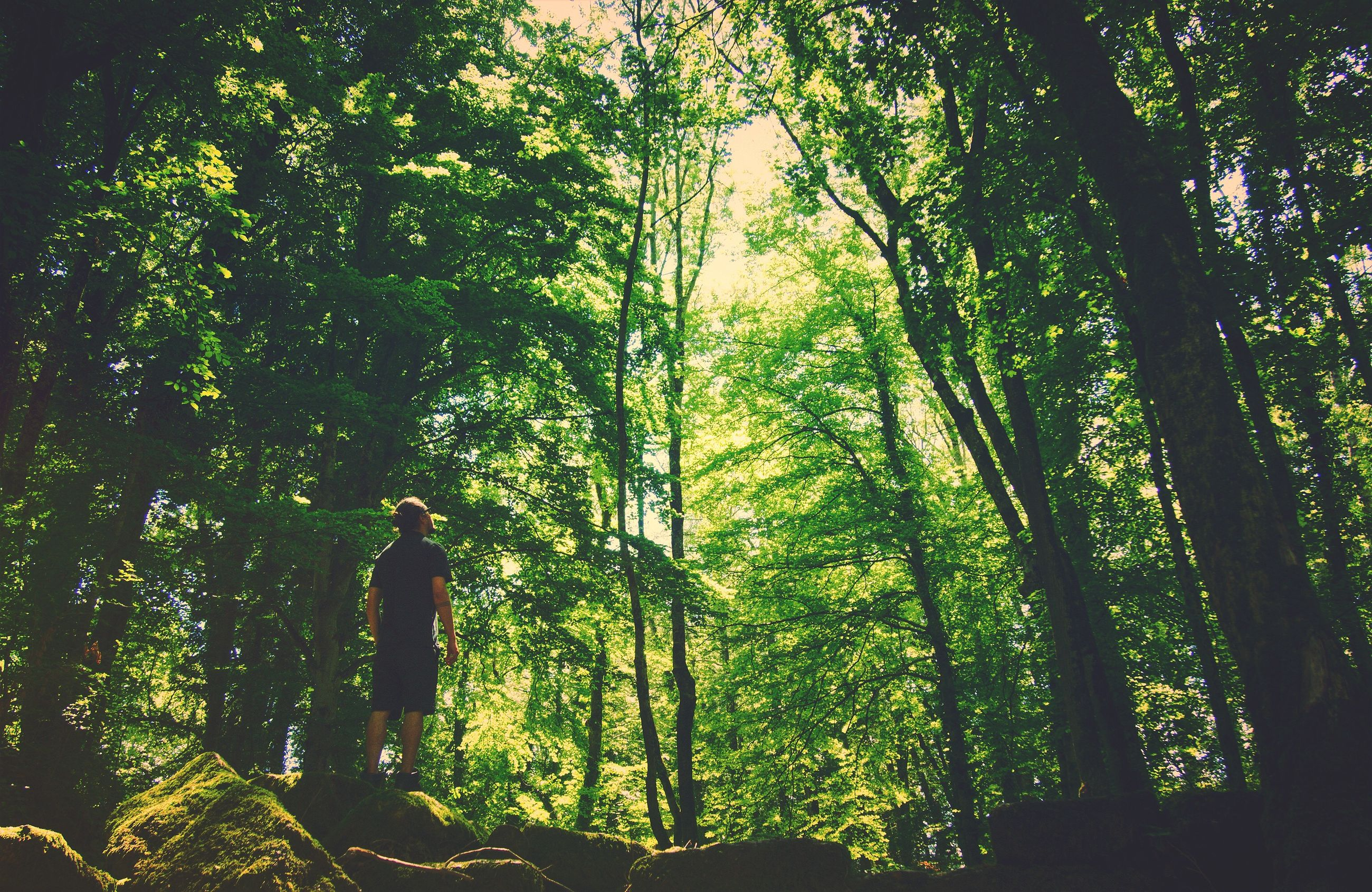 tree, plant, forest, land, one person, real people, nature, beauty in nature, growth, standing, woodland, green color, day, tree trunk, leisure activity, trunk, lifestyles, tranquility, outdoors