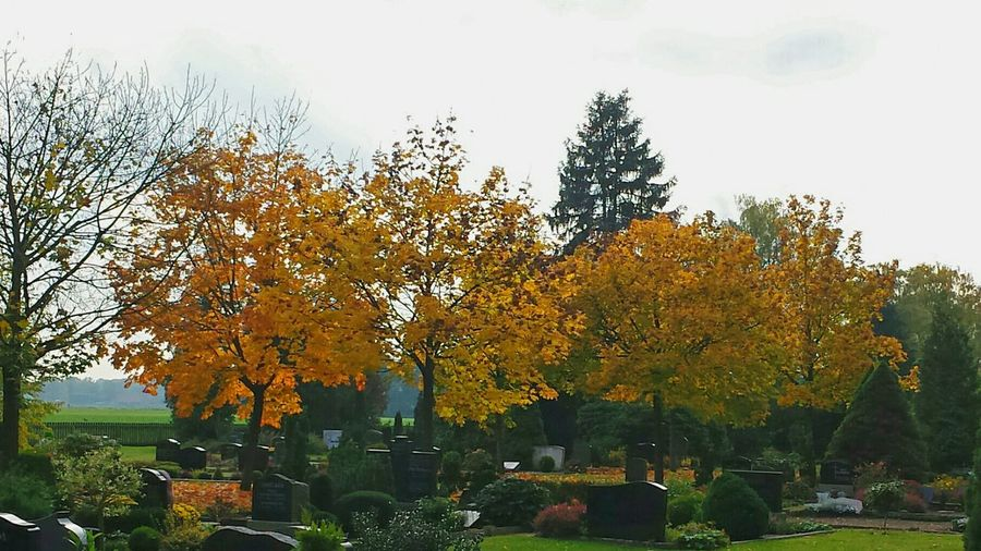 Cemetry Friedhof Herbstmelancholie Automn Trees Colours Of Autumn Colourful Automn Colors Melancholic Grabsteine Ladyphotographerofthemonth Calmness Within Ort Der Besinnung Cemetery Beauty Silence Grey Sky Landscapes With WhiteWall