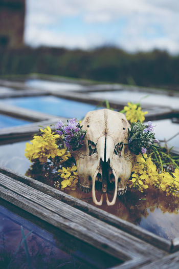 Close-up of animal skull by flowers
