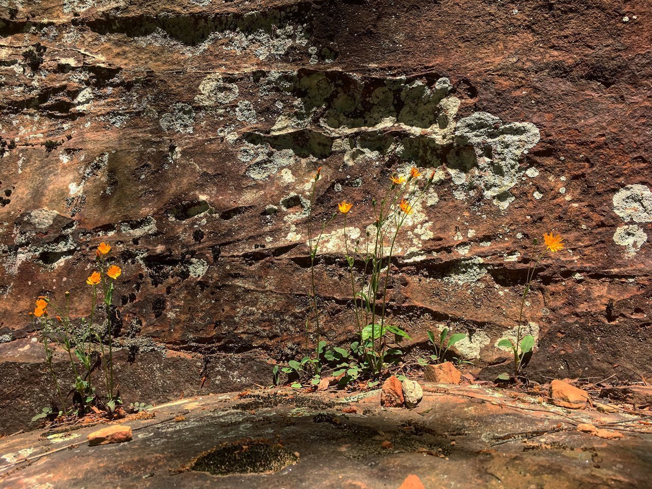 no people, day, nature, textured, plant, growth, outdoors, solid, close-up, rock, rock - object, wall - building feature, weathered, wall, land, tree, full frame, old, built structure, brown