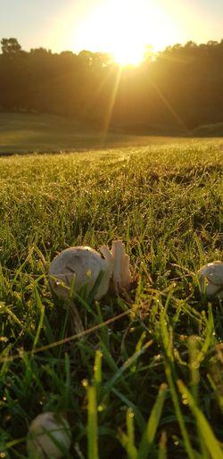 Sunrise and fungi Sunrise Fungi Early Morning Early Autum