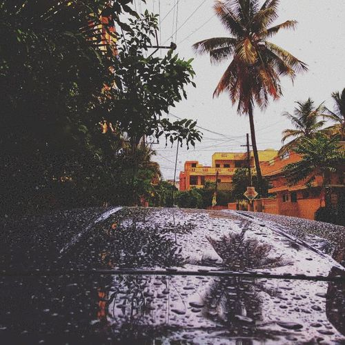 P L U V I O P H I L E ❤️ Car FordFigo Figo Ford Shotonphone Mia1photography Tree Water Palm Tree Swimming Pool City Sky Architecture Building Exterior Focus On The Story
