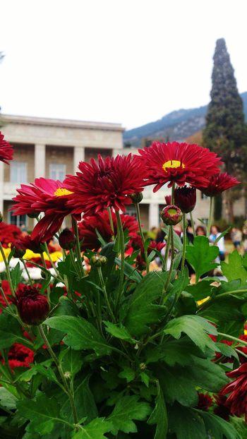 Pleasant autumn in Crimea Close-up Flowers Flower Head Landscape Beauty In Nature Golden-daisy Russia Mountain Yalta Botanical Gardens