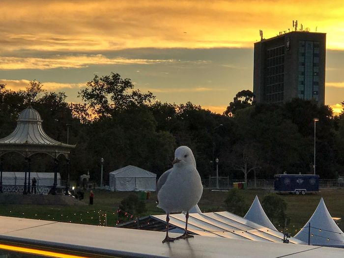 Morning view. Beauty In Nature Nature Sunrise Architecture Building Exterior Animal Themes One Animal Bird Animals In The Wild Cloud - Sky Seagull Nature