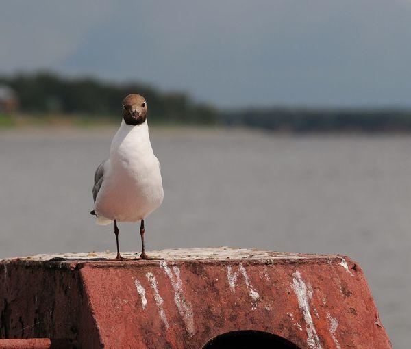 Bird Perching Water Animal Themes Close-up
