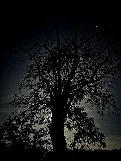 Tree on the