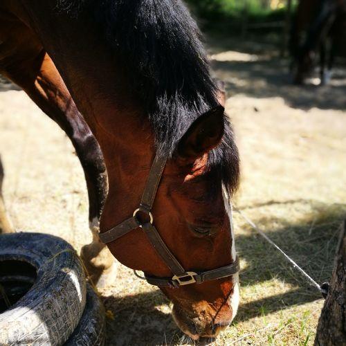 Horse Horse Riding Horse Friends